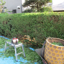 茶畑の仕事