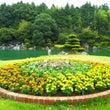 秋の花壇 (^^♪