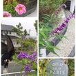 夏から秋へ お花たち
