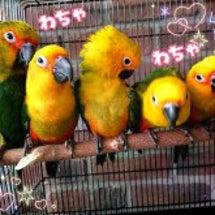 鳥カフェ♪