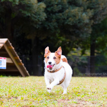 空飛ぶ犬♪