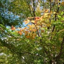 軽井沢の小さい秋