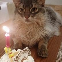 エルネスト君の誕生日