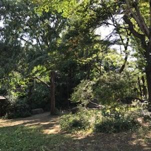 秋のくさっぱら公園の画像