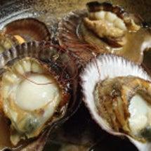 珍しい貝「赤皿貝」