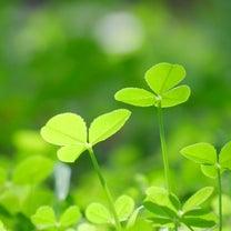 魂が緑色の人の特徴とは?~癒しのパワーで平和を愛する魂~の記事に添付されている画像