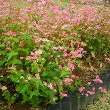 花の丘公園までお散歩