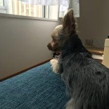 私の相棒(愛犬)