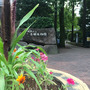 赤塚植物園なう