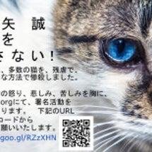 大矢誠被告による猫虐…