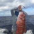 びっくり 巨大魚‼️