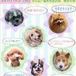 ☆アルマ卒業犬オフ会…