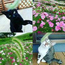 """""""☆ごはん待ちの猫☆…"""