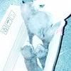 今、メンバーが保護した4頭の仔猫の画像