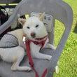 ペット専用椅子あり