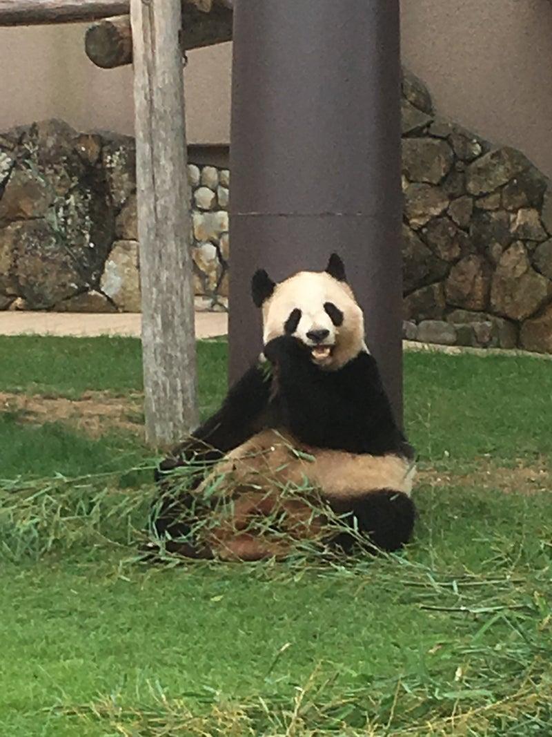 南紀白浜アドベンチャーワールドにパンダを観に行って来たよ