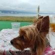 琵琶湖なぎさテラス