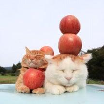 津軽りんご