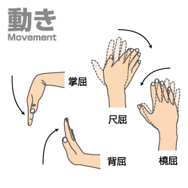 「手首 掌屈背屈尺屈撓屈」の画像検索結果