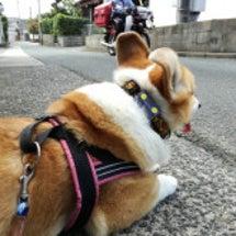 犬の苦手が増える?「…