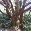 上高地で見つけた木