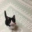 保護猫 続報