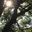 木洩れ日の降る時間