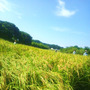 稲を刈るの巻(●^o…