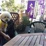 軽井沢ワンコOK 蕎…