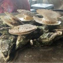 牡蠣牡蠣〜♡