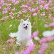 秋桜o(^-^)o