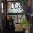遊眠堂  (CAFE…