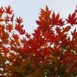 紅葉ガーデンを拝見!…