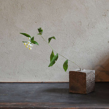 野菊 ヨメナ