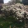 春の柳の美しさ