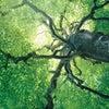 ふと、森の画像