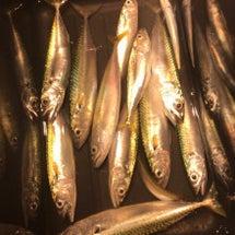 小樽に鯖釣り