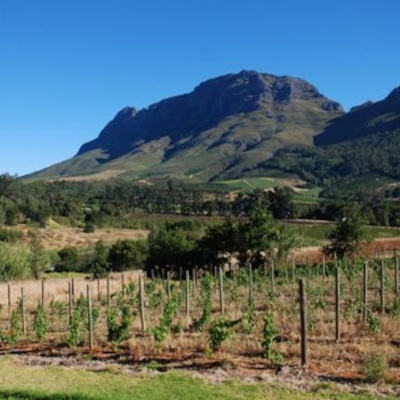 ソムリエ/ワインエキスパート試験対策...南アフリカの記事に添付されている画像