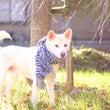 羊毛フェルトの雑種犬