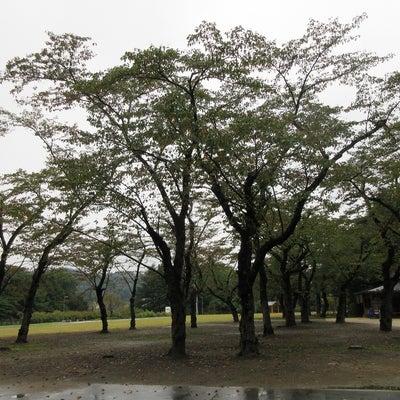 櫻岡大神宮(宮城県 仙台市)の記事に添付されている画像