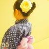 長唄 「菊づくし」の画像