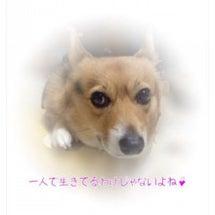 スカイプ(気功・オー…
