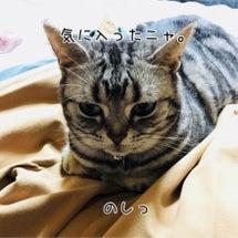 のっとり猫ニャ。