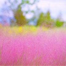 今年の秋はピンク色