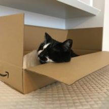 トレンドの箱