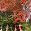 秋です(^^)