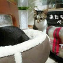 ☆そっちがいい猫☆