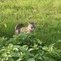 草むらにキジネコ発見…