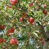 果物狩り!秋ですね(*^。^*)の画像