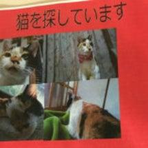 """【拡散希望】""""高松で…"""